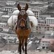 Артена: в итальянском городе появились экологичные мулы-мусоровозы