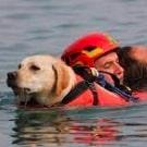 Сперлонга, Лацио: обученные собаки спасли унесенных в море людей