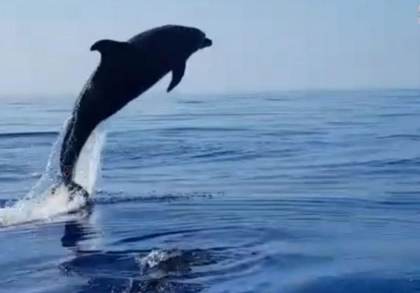 Прочида: Мама-дельфин поблагодарила за спасение детеныша