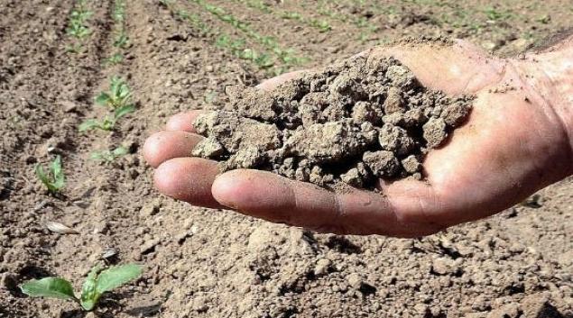 Сельское хозяйство Италии страдает из-за невероятной жары