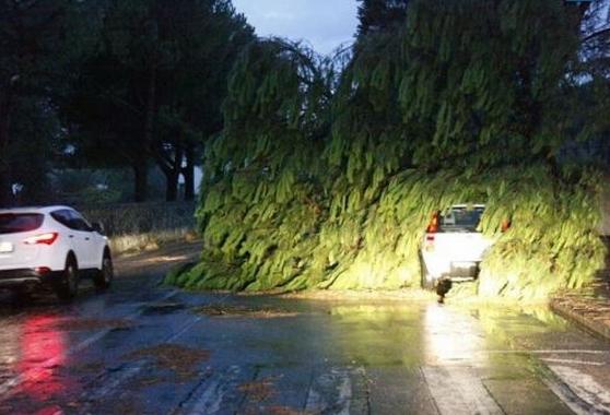 Торнадо пронесся по территории итальянской Флоренции
