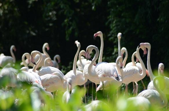 Необыкновенная жара — до 40 градусов и выше, установившаяся на долгий период на всей территории Италии, угрожает жизни малышам фламинго