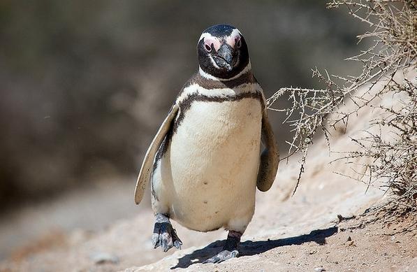 Пингвины были найдены в задней части грузовика, оборудованного холодильником, который был неисправен