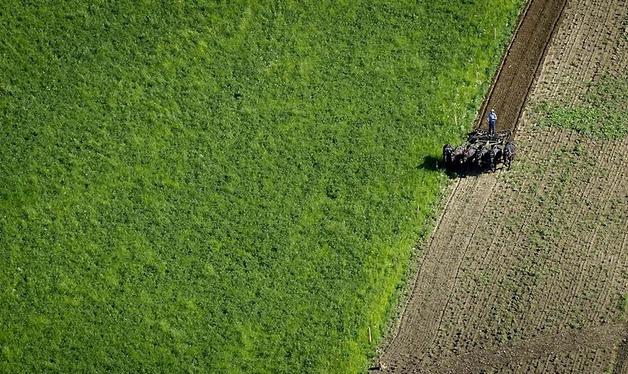 Возле Вероны на фермерском поле местный ландшафтный дизайнер Дарио Гамбарино создал портрет своего кумира – актера Робина Уильямса