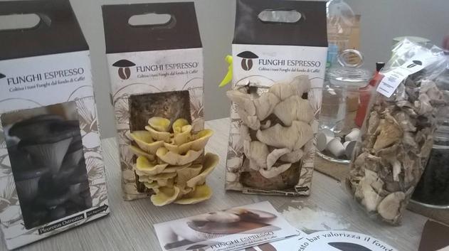 """Funghibox"""" - продукт социального кооператива """"Ecosphera"""", создающего экологические продукты ecofriendly и предоставляющего экологические услуги для местного сообщества"""