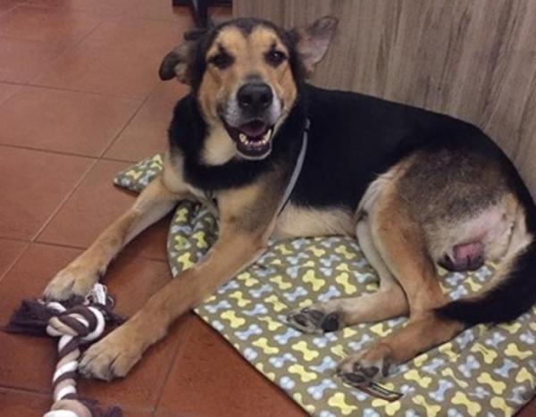 Первую премию «Собачья верность - 2015» заслужил безродный пёс по кличке Ангел