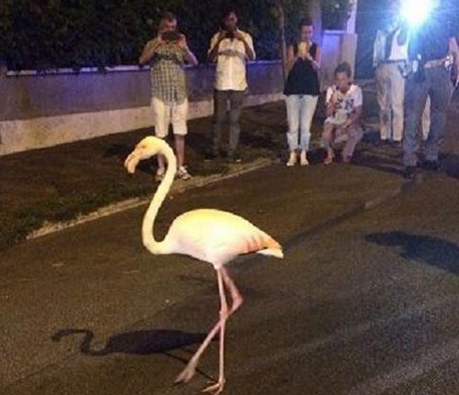 Многие вышли на улицы, чтобы сфотографировать птицу или попытаться сделать селфи