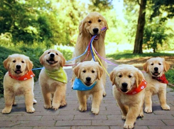 В Италии прошло награждение Международной премией «Собачья верность-2015»