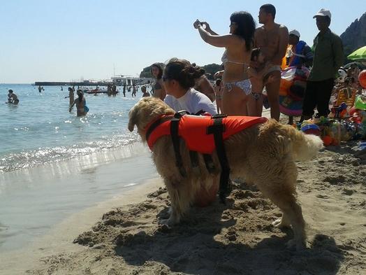 Сицилия. Безопасность на море. Baywatch о четырёх лапах