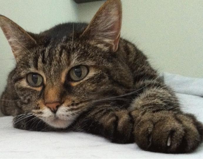 Кошка стала яблоком раздора между двумя соседскими семьями