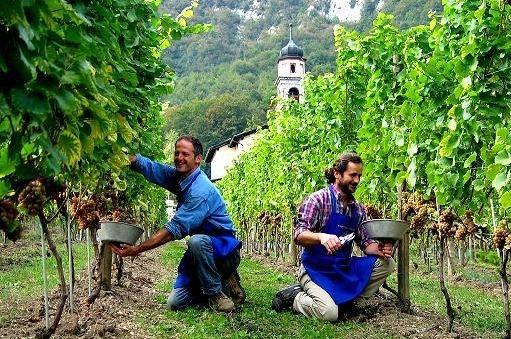 Сезонные работы Италия 2012