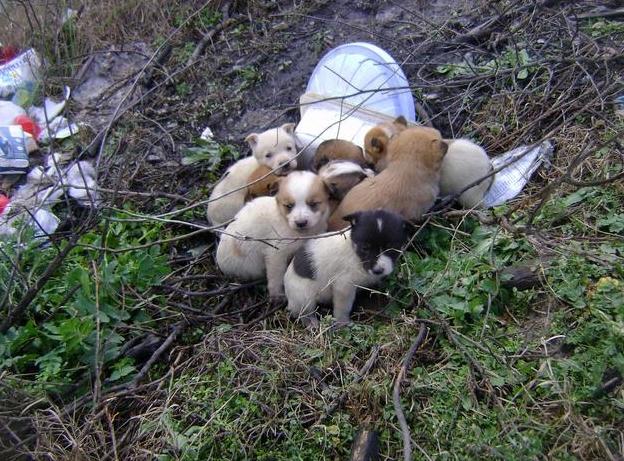 40 щенков в Неаполе рискуют быть сбитыми автомобилем