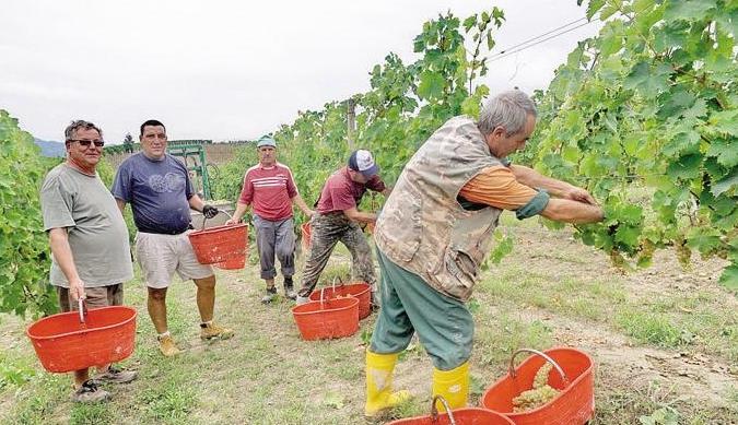 Асти, Пьемонт - эксплуатация иностранных рабочих на виноградниках