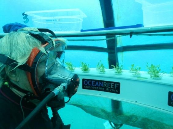 Огород под водой? В Италии могут и не такое
