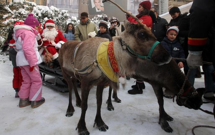 В Италии сбежал Рождественский олень