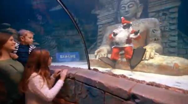 Представления в аквариуме Езоло Sea Life