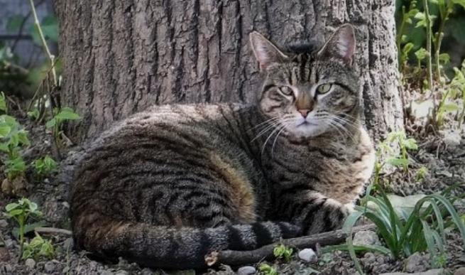 Милан: в городе откроется кошачий парк