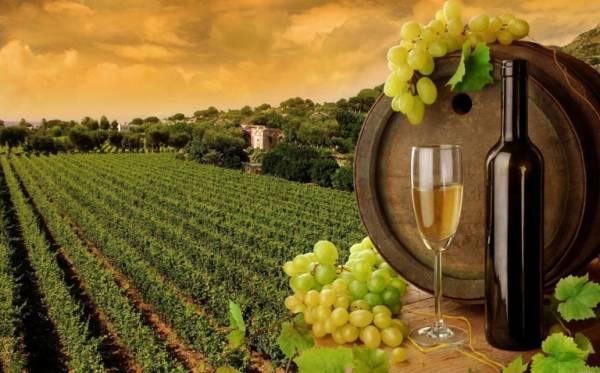 Виноделие: Санкции торговле не помеха