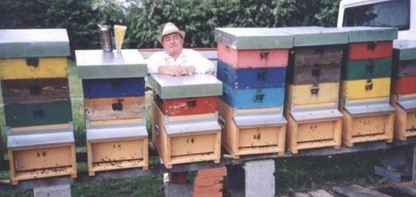 Итальянский пчеловод предлагает награду 1,2 миллиона за пчел