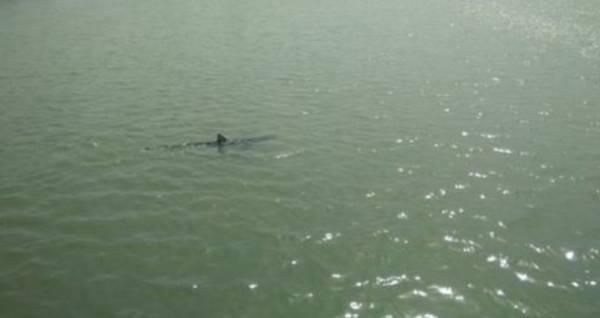 Длинная двухметровая акула вызвала панику среди моряков на реке Тибр