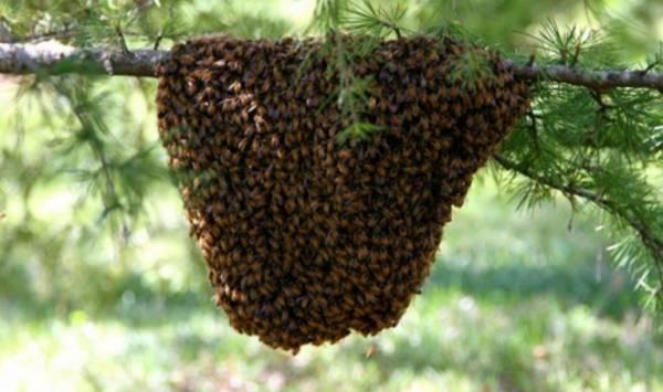 Итальянца на глазах у семьи убили пчёлы