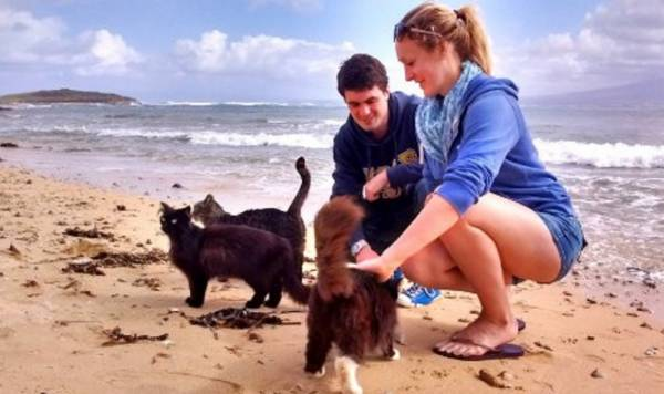 Кошачий пляж на Сардинии удивляет туристов