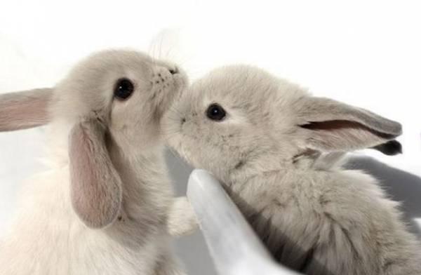 Итальянский учитель уволен за убийство двух кроликов