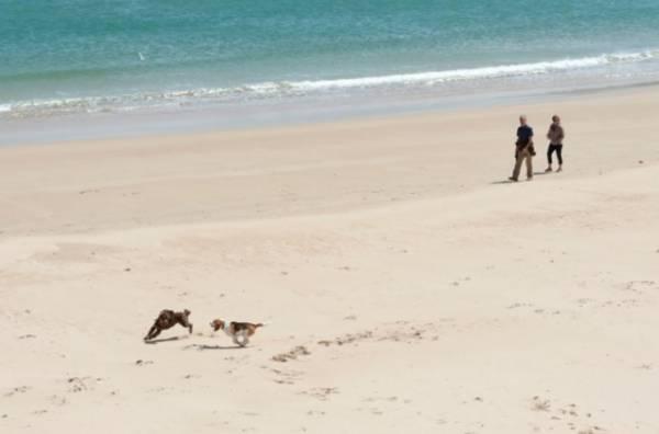 Собачки возможно смогут погреться на итальянских пляжах