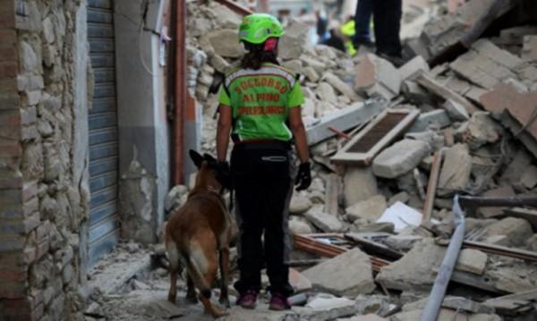 Полиция разоблачила мошенничества, связанные с землетрясением