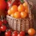 В районе Вомеро Неаполя открывается томатный фестиваль «Degusta»
