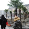 Новые пальмы Милана подожгли в воскресенье