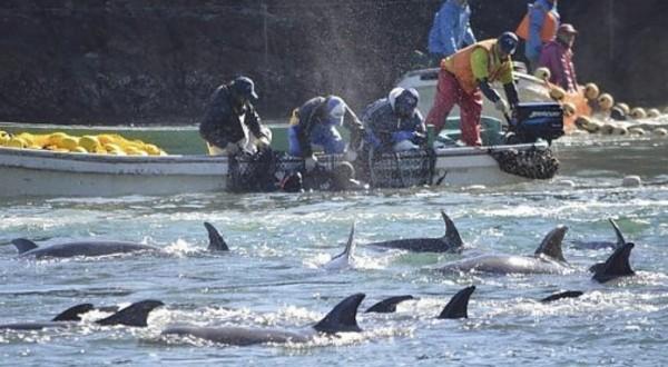 В Сицилии рыбаки протестуют против дельфинов