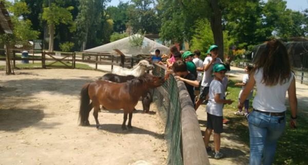 В зоопарке Неаполя открыт детский лагерь