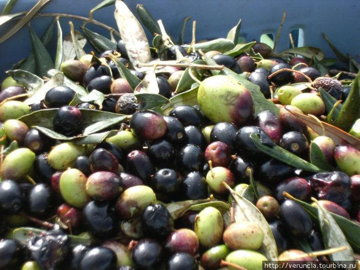 привезти бутылочку оливкового масла