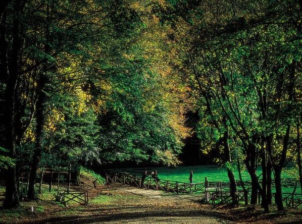 Немалый интерес у туристов вызывает посещение леса Умбра в город Вьесте