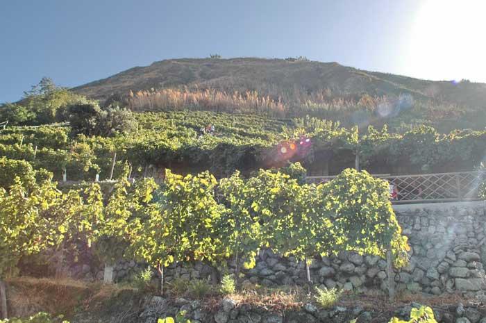 Вино Ischia bianco из смеси сортов винограда Biancolella и Forastera