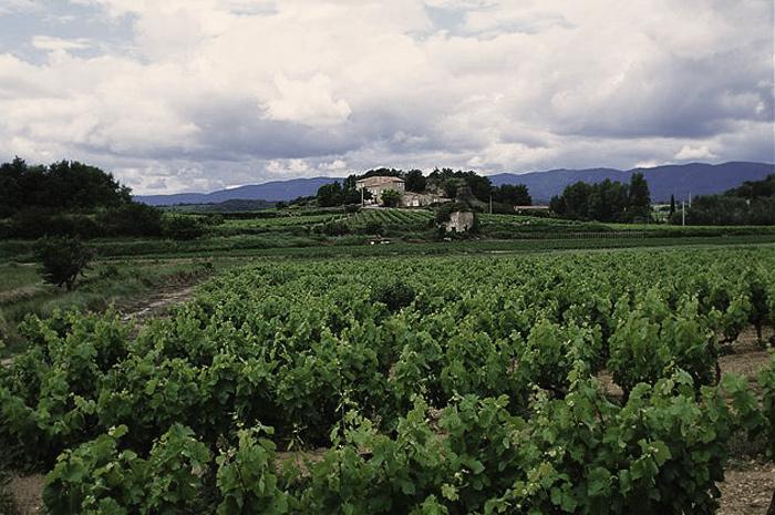 Греки привезли на Сицилию вино и оливки