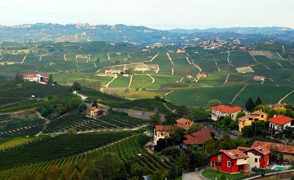 идиллические виноградники тянутся на многие километры, создавая пейзажи, как из альбомов о путешествиях или открыток