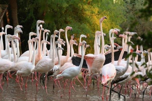 Зоопарк Пунта Верде находится в Линьяно Ривьера